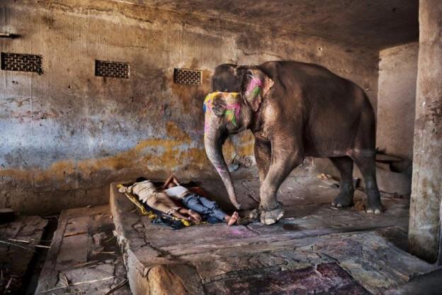 Les éléphants, incarnations du dieu Ganesh