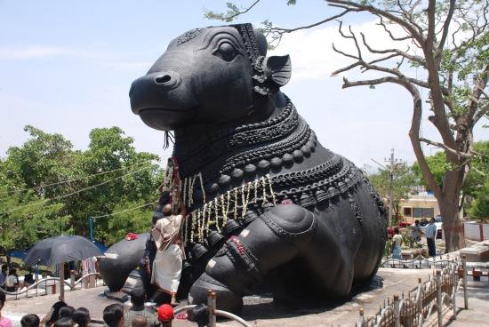 Nandi, le taureau de Shiva