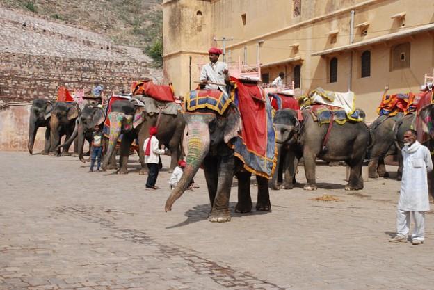 Les éléphants dans la cour du Fort d'Amber.