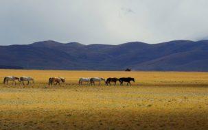 alexandra-david-neel-paysage-tibet-omalaya