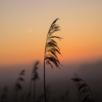 sunrise-2351990