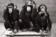 Les trois singes de la sagesse, un important symbole vieux de deux millénaires